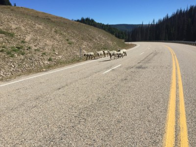 Open range on the descent of Wolf Creek.